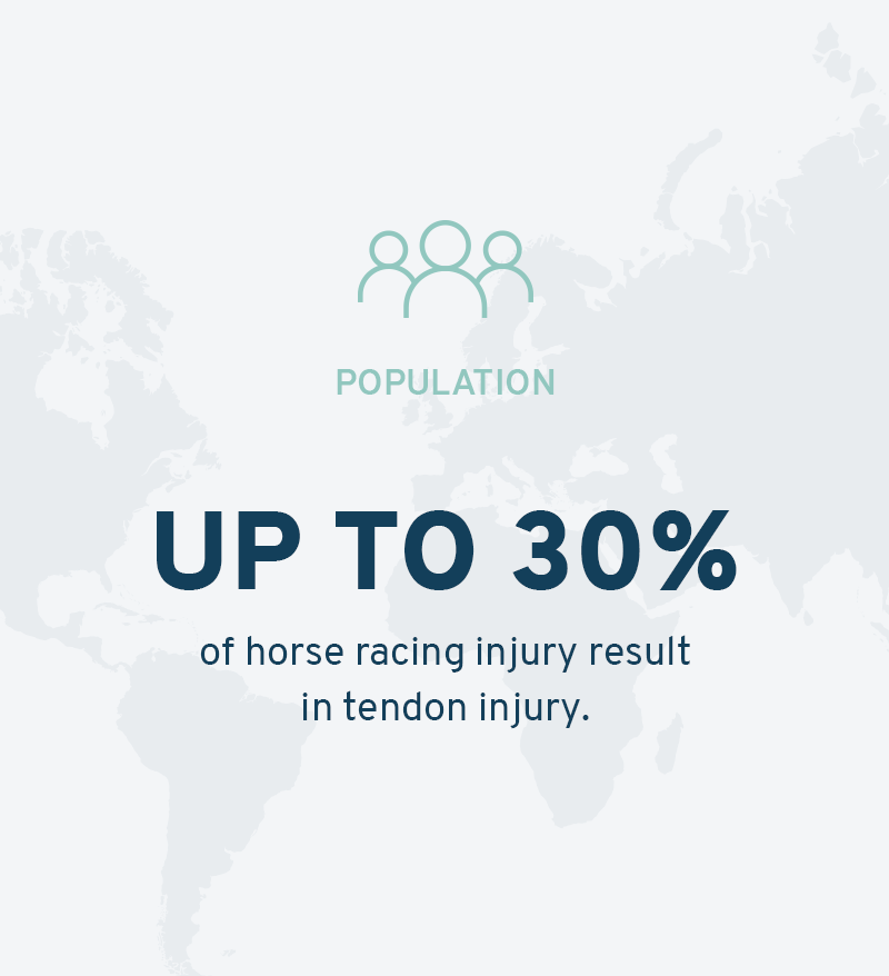 Tendonitis in horse